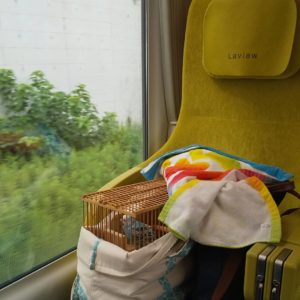 Bird sitting in his cage in Laview train