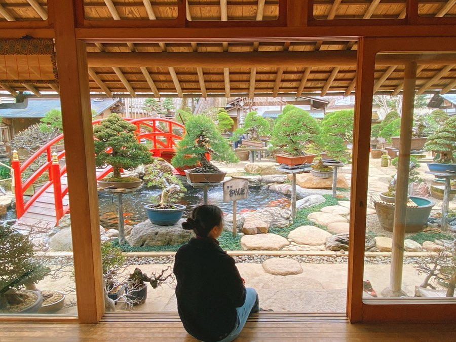 woman looking out on bonsai courtyard