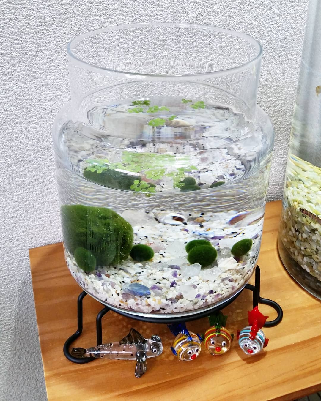 big and small marimo