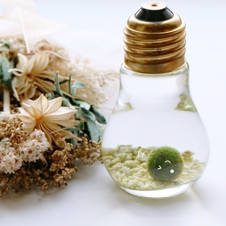 marimo inside a lightbulb
