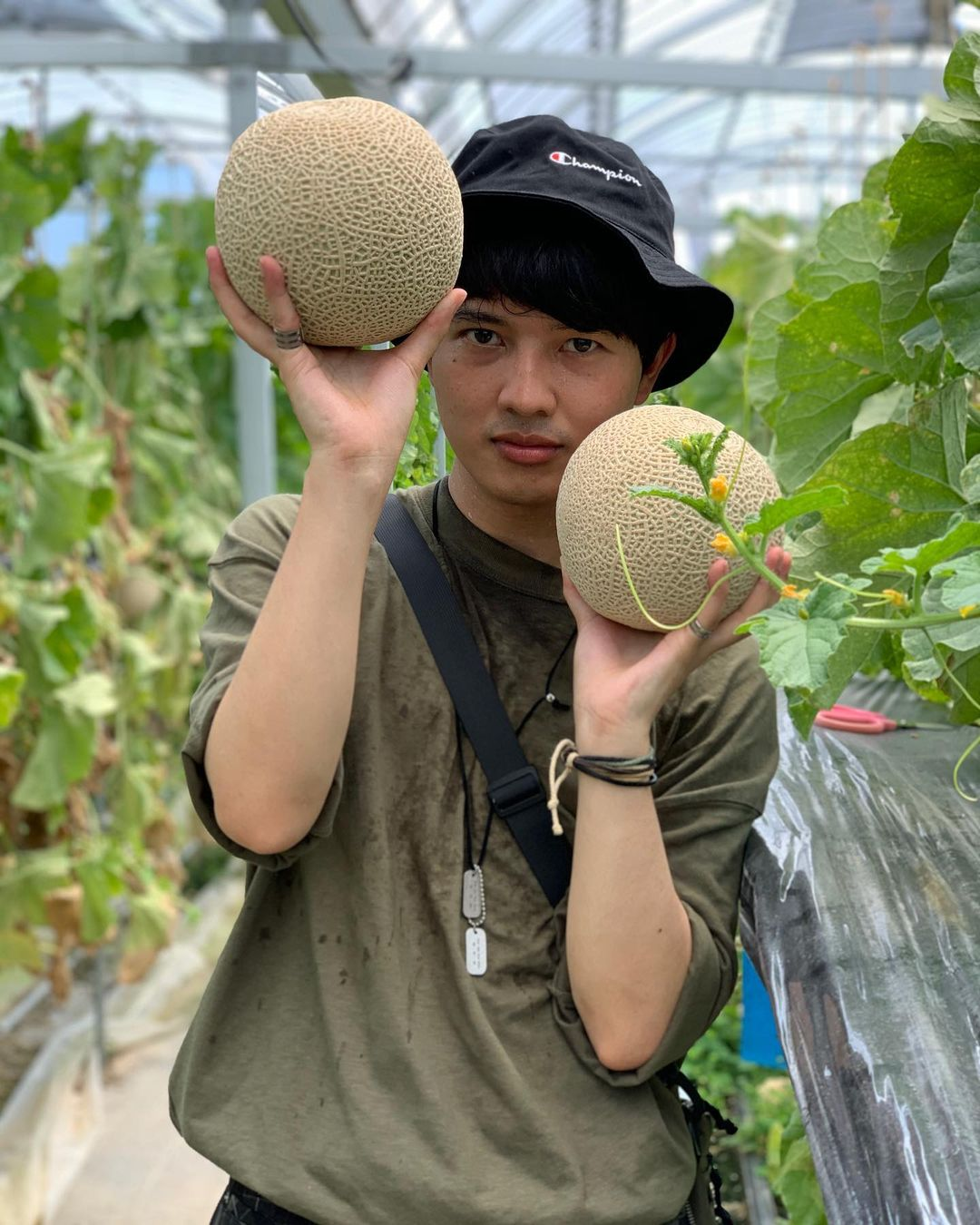Izu Fruit Park musk melon